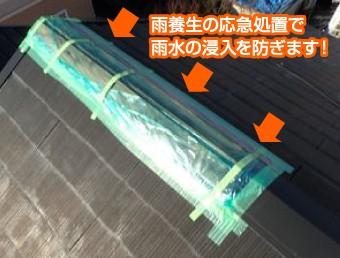 雨養生で応急処置された屋根の棟