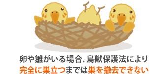 卵や雛がいる場合、鳥獣保護法により完全に巣立つまでは巣を撤去できない