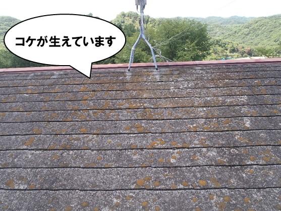 屋根にコケが生えています