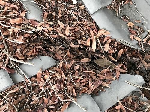 枯葉が長年にわたって堆積した谷部