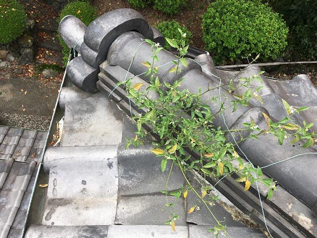 雨漏り修理 屋根から雑草