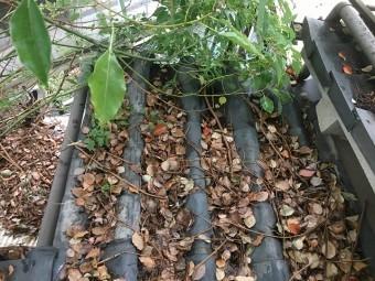 瓦屋根に落葉びっしり