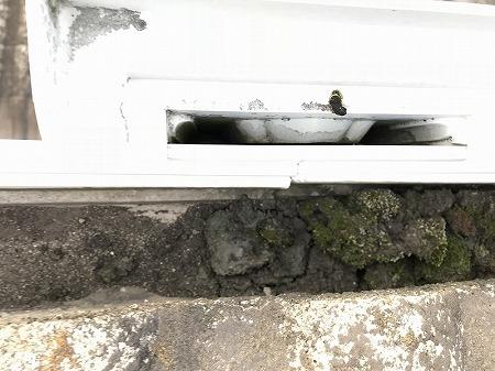 集水口に汚泥が溜まって流れません。