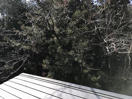 裏に雑木林が茂っております。