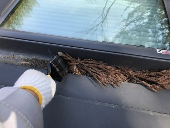 刷毛で、天窓の枯葉を掃除していきます。