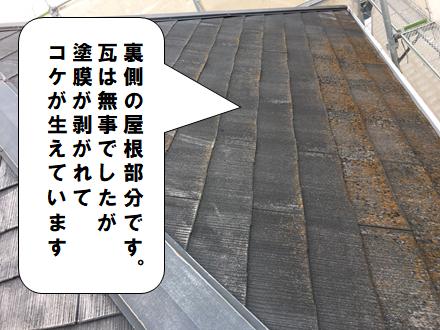 寝屋川市 屋根にコケが生えています