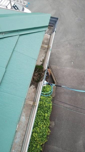 軒樋の排水口にゴミが詰まり苔が生えています。