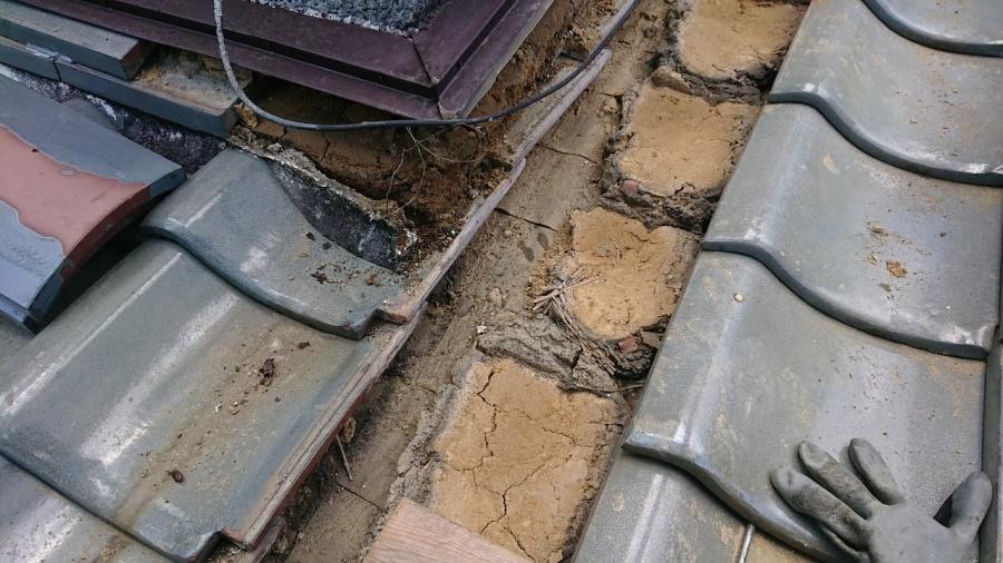 コーナー部分の土は湿っています。