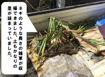 門真市 樋掃除で雑草を取り除きました