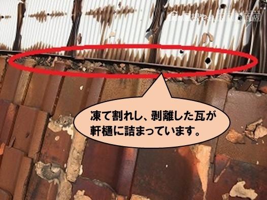 雨漏り修理 剥離した瓦で軒樋詰まり