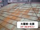 コケ・カビがはえている大屋根